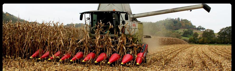 Уборка кукурузы Луганск
