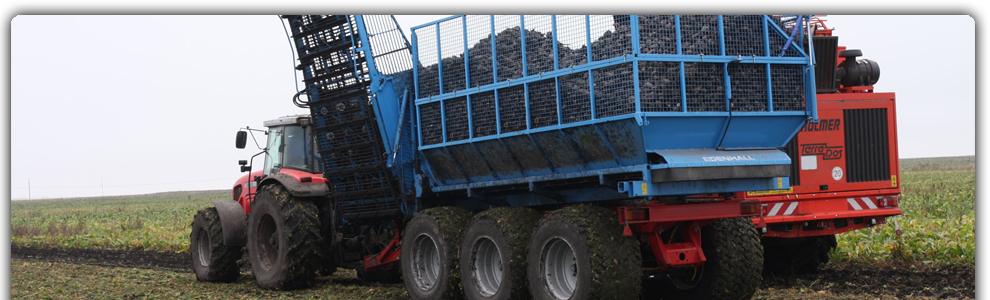 Уборка сахарной свеклы Полтава